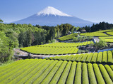 green tea fields iv