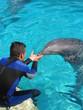homme et dauphin