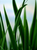 aquatic grass poster
