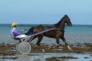 cheval de course sur la plage