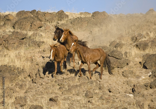 four wild horses standing on the hillside