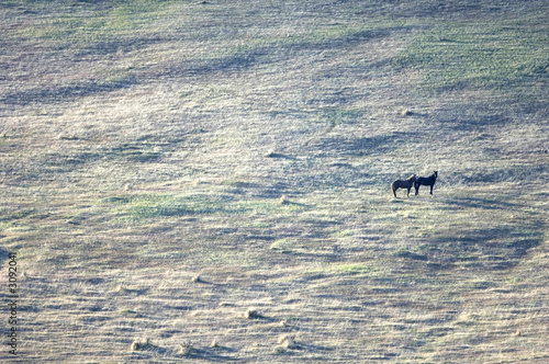 two wild horses standing on the hillside