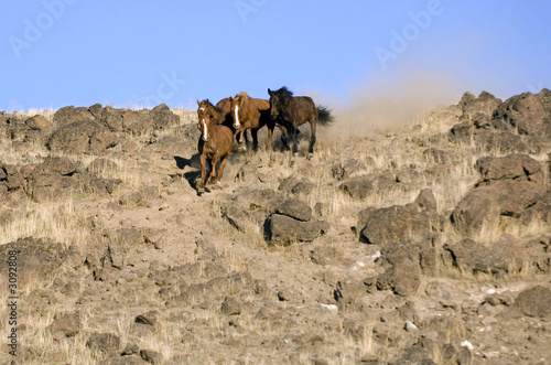 wild horses running down embankment