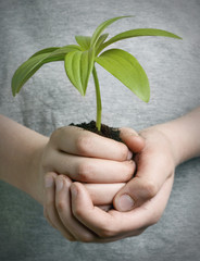 boy holding seedling