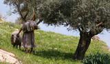 nazareth shepherd poster