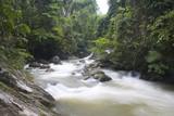 tropical rainforest stream poster