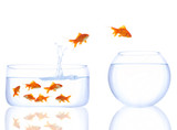 goldfishes in the queue