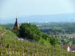 clocher de village viticole, vignoble