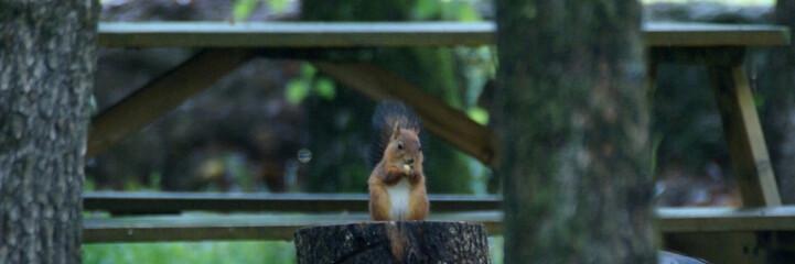 le déjeuner de l'écureuil