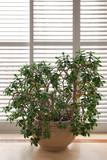 Fototapety house plant