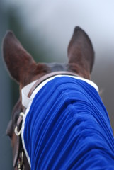 cheval en alerte