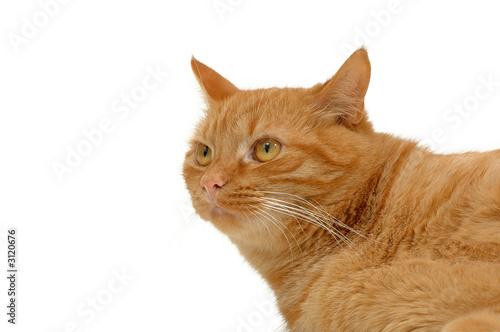 Leinwanddruck Bild resting cat