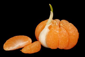 mandarin with garlic clove