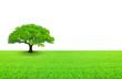arbre sur prairie et fond blanc