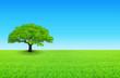 arbre sur prairie et ciel bleu