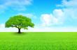 arbre sur prairie et ciel nuageux