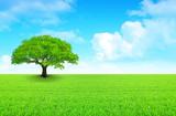 Fototapety arbre sur prairie et ciel nuageux