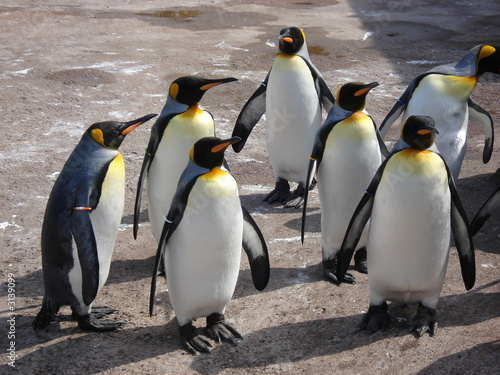Foto op Aluminium Antarctica group of penguins