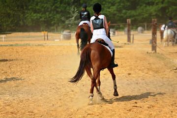 cheval au trot
