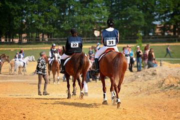 chevaux en compétition