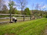 ponies grazing poster