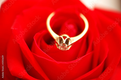 gold ring with diamond on red rose