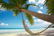 Leinwandbild Motiv palm and hammock