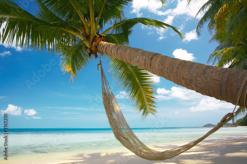 palm and hammock
