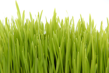 fresh grass isolated on white