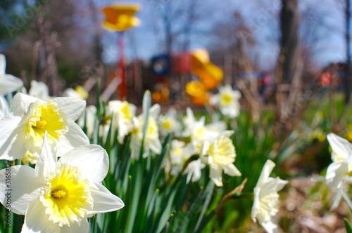 poster of beautiful flowers - symbolizing the beginning of a