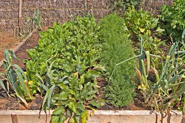 vegies in rows