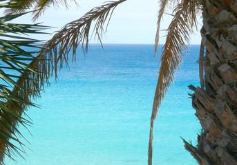 oceano dalla palma