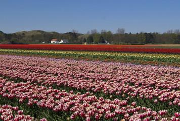 tipical dutch spring field