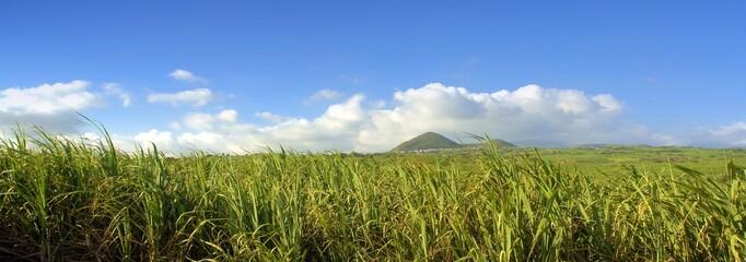 champs d'énergie renouvelable : biocarburant