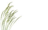 herbes sur fond de ciel blanc - Fine Art prints