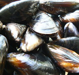 mussels poster