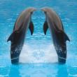 Quadro dolphin twins
