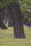 tree stem poster