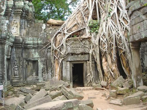 a tree over old ruin temple,  ta prohm, bayon, angkor tom, cambo