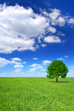 Fototapety spring landscape, lonely tree