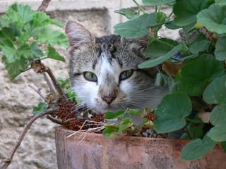 gatto nel vaso