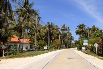 tropical road