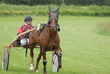 le jockey et sa monture