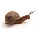 the snail creeps