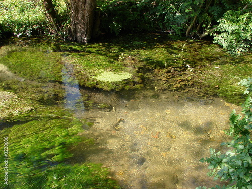 aquatic plants in clear water