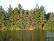treesandlake