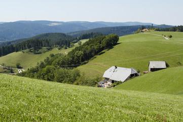 Landschaftswiese mit Häusern und Wald im Sommer