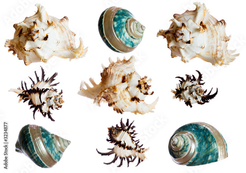 set of spiral shells isolated on white