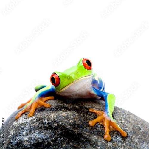 Fototapete Reptilien - Frosch - Chamäleon - Poster - Aufkleber