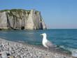 mouette sur la plage d'étretat